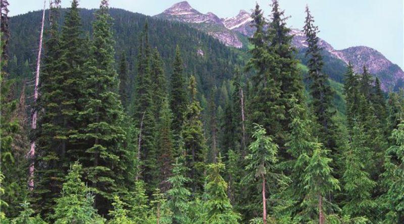 Javna rasprava o Zakonu o izmjenama i dopunama Zakona o šumama KSB/SBK