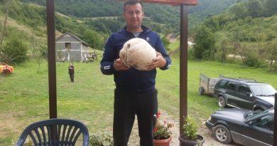 David Ramčić u Dobrošinu pronašao gljivu od 4,5 kg